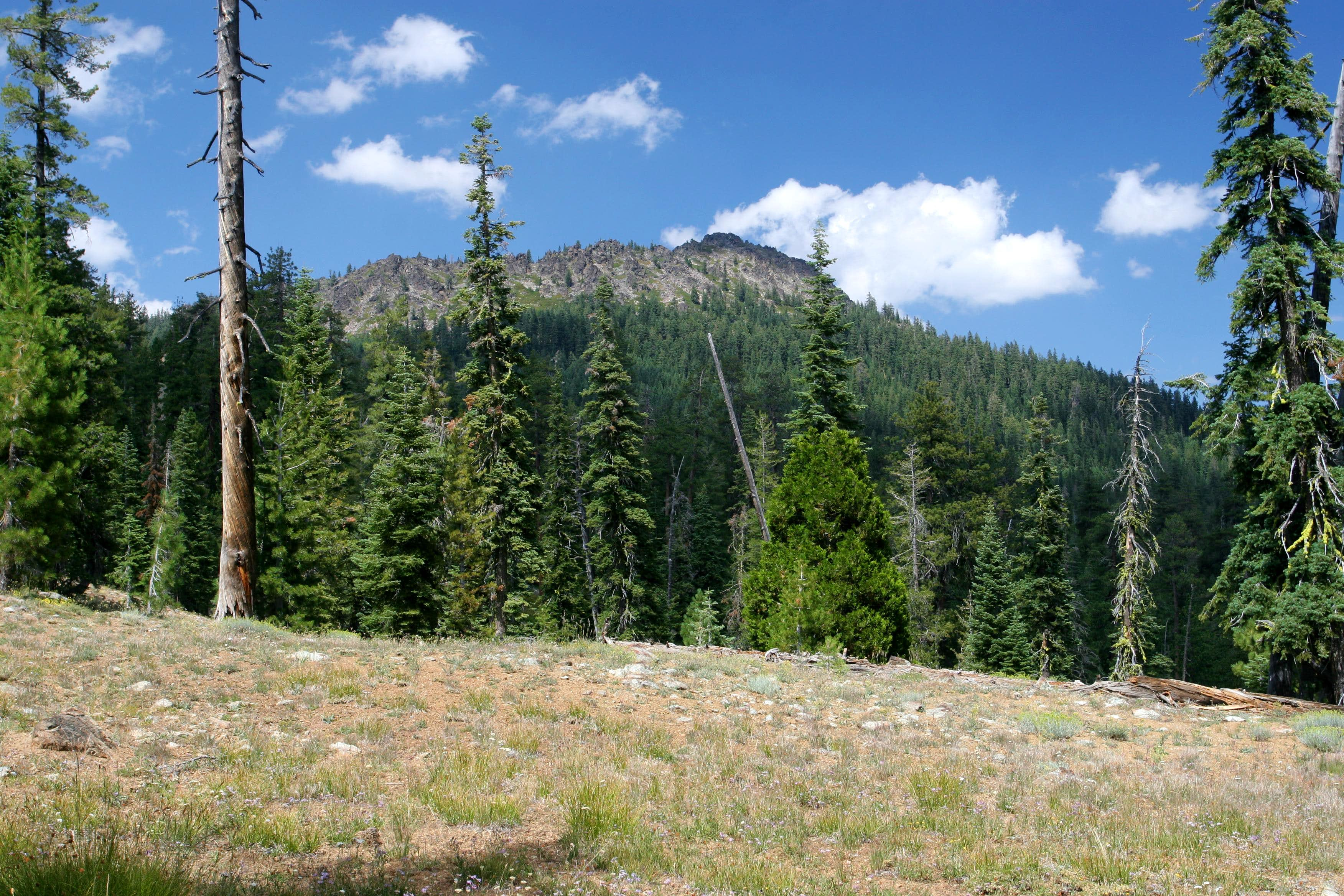 "PCT to ""Porcupine Peak"""