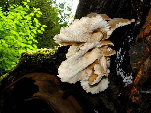 Wonderful Fungus