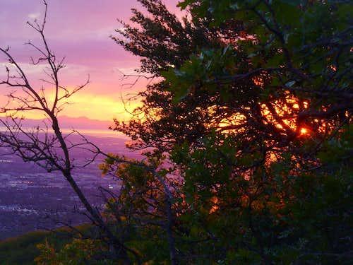 Mountain Mahogany on Tolcats Trail