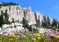 Wildflowers Below Lone Peak Cirque