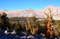 Cirque Peak and some Tree\'s