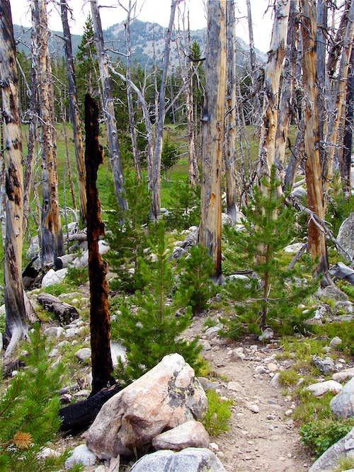 Sweetwater Gap Trail
