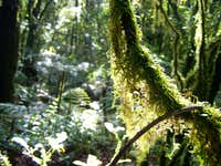 Mossy Cloud Forest