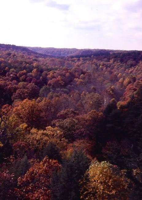 Autumn sprinkles the hardwood...