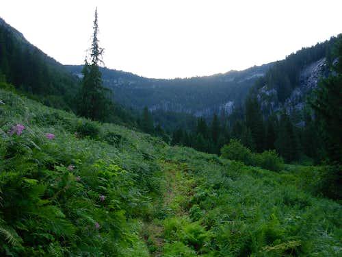 Bear Creek Meadow