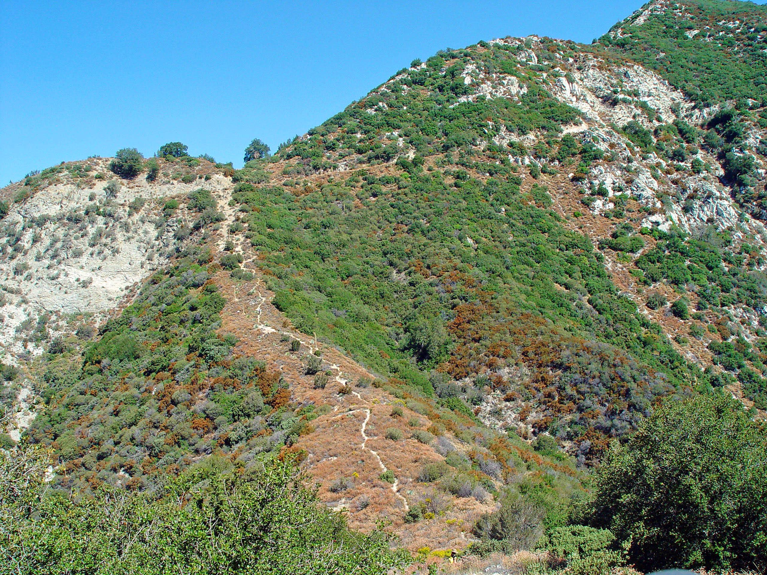 Upper Little Santa Anita Canyon Loop