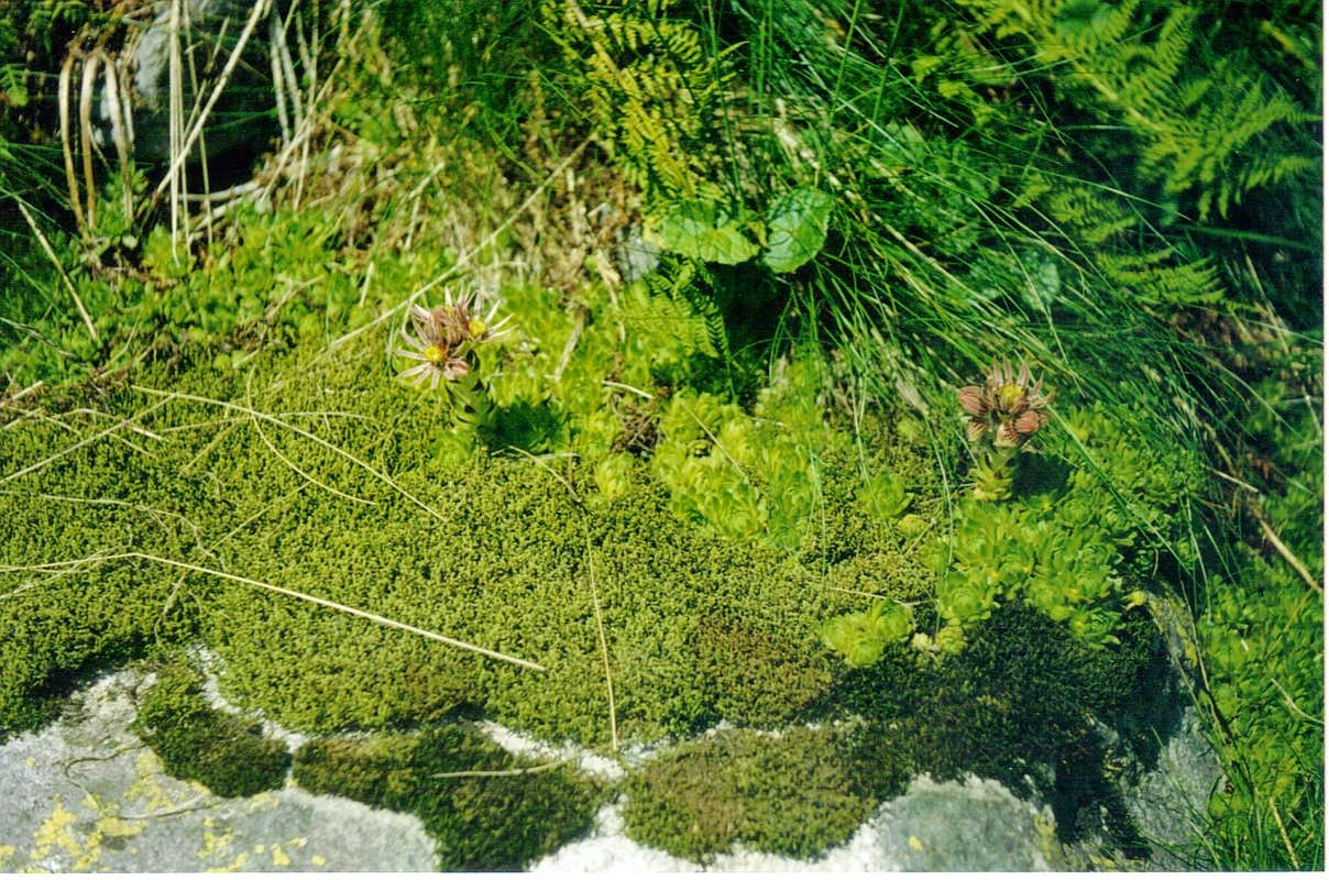 Moss Rug Embroidered