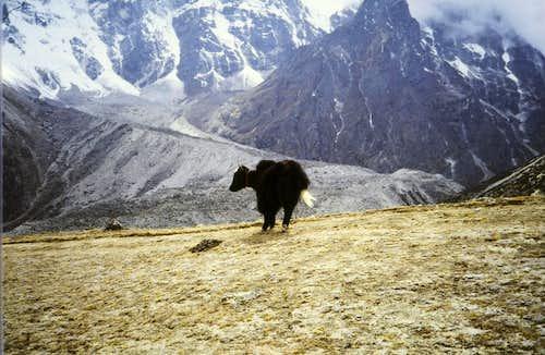 Himalayan wildlife!