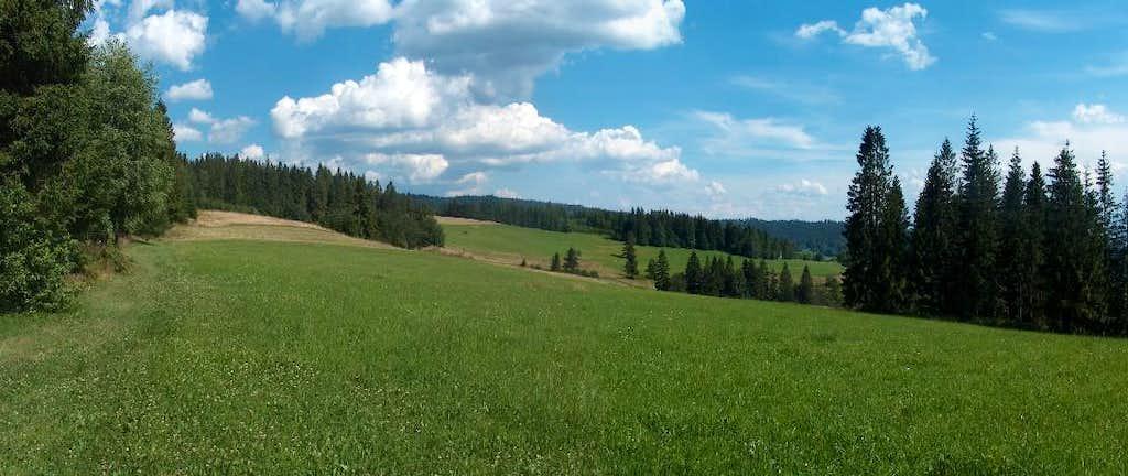 Meadow in Gorce
