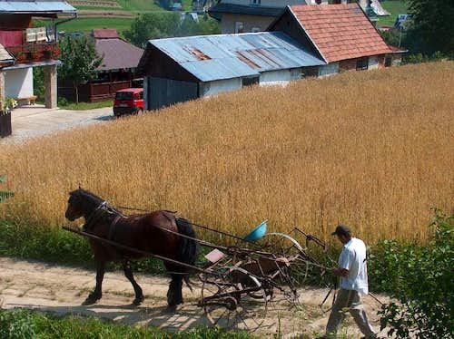 Agriculture in Gorce