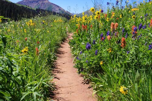 Mount Baldy and Wildflowers
