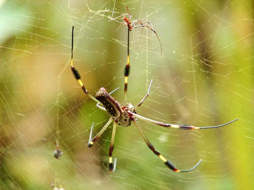 Spiders from Costa Rica