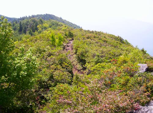 Trail From Mt Cammerer