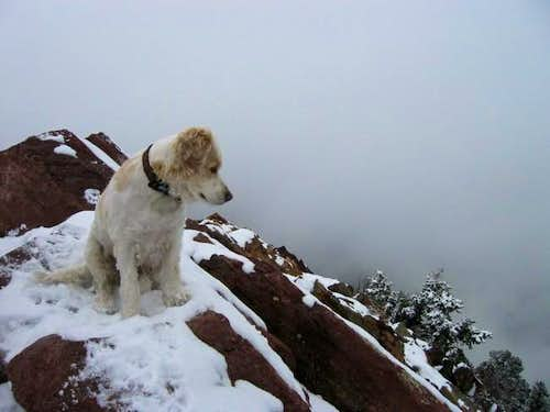 Ray dog on the summit of Bear...