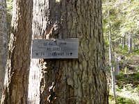 DeRoux Spur 1392.1 to Koppen Ridge