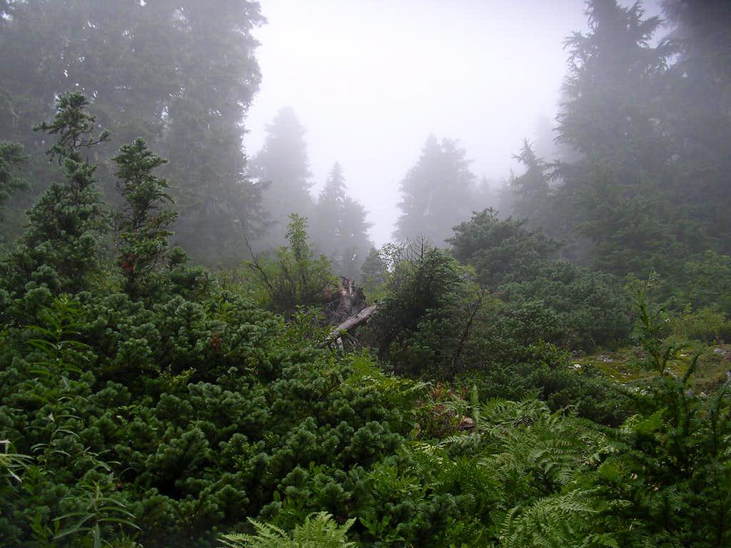 Ascending Union Peak- in the fog.