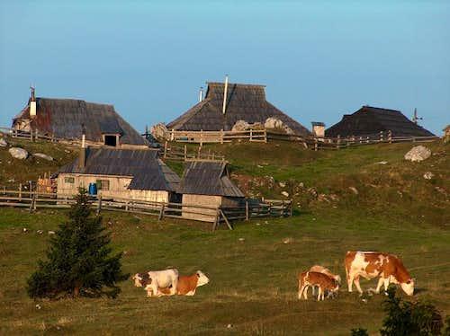 Two days on Velika Planina