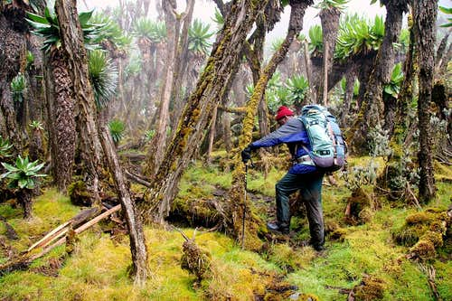 Rwenzori hiking