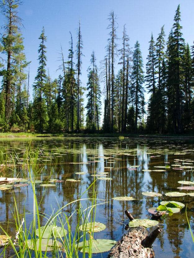 Lily Pond - Rosary Lakes
