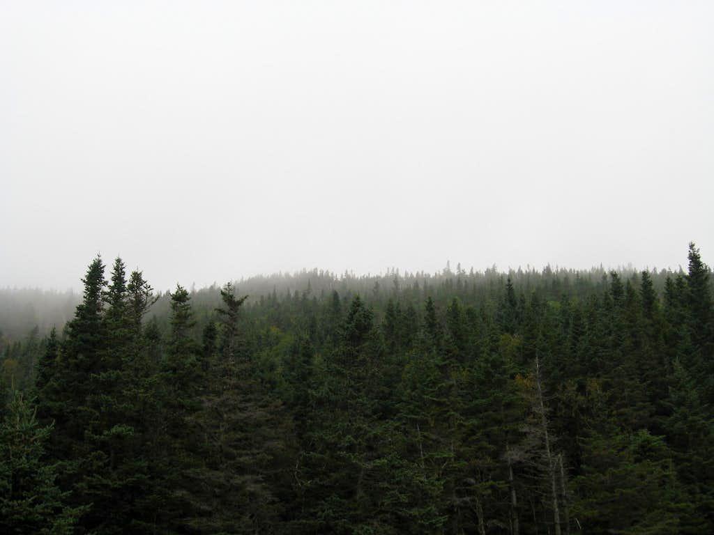 Dense Fog on Mount Pierce