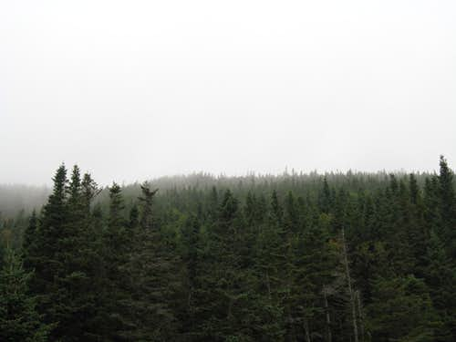 Dense Fog on Mount Pierce