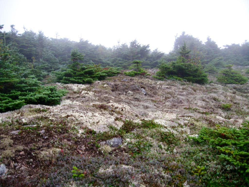 Nice Flora near Mount Eisenhower
