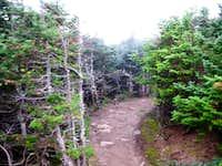 Trail descending Mount Pierce