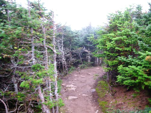 Trail descending Mount Pierce
