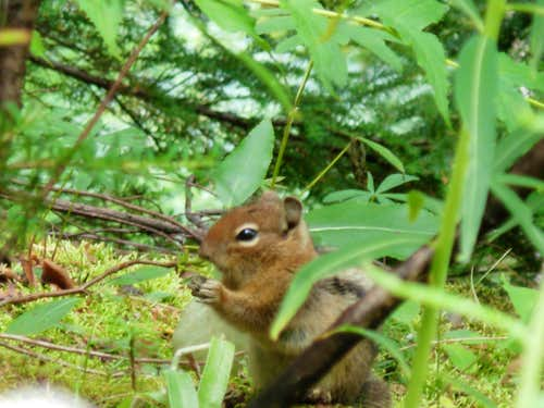 Chipmunk Eating in Wild Sky