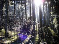 Light ambiance