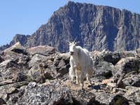 Granite and a Goat