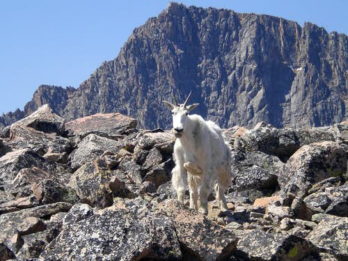 Granite and a Goat