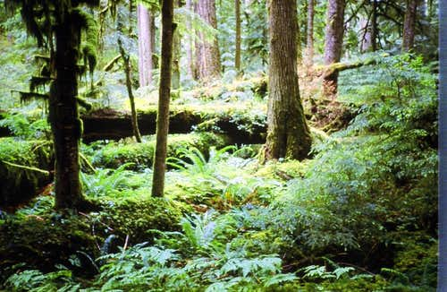 Forests of the Cascades