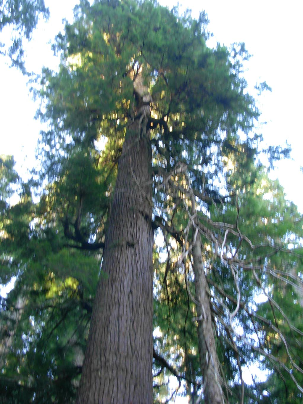 Old-Growth, Second-Growth