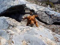 Dachshund Rock Climbing School