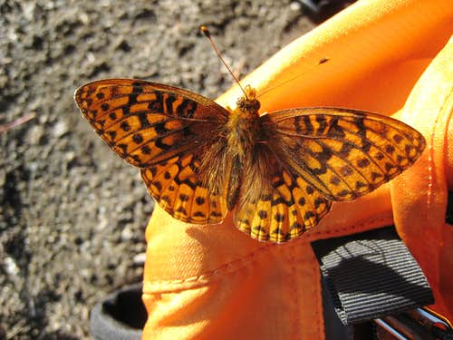 Butterfly on my pack