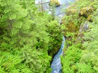 The Hoh Rain Forest , a long,...