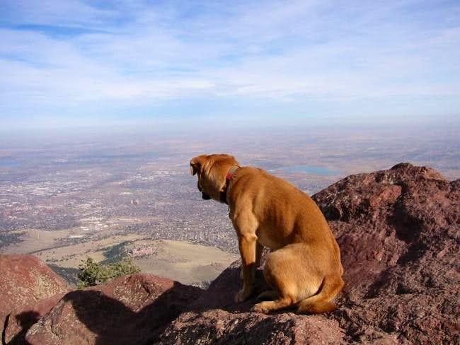 My dog Sopris gazing down on...