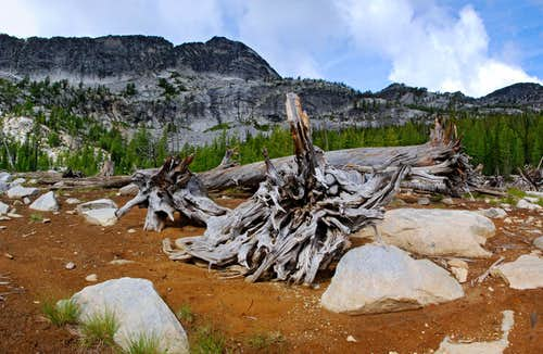 Canyon Peak and Roots