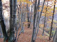 Beech forest in Val Pogallo