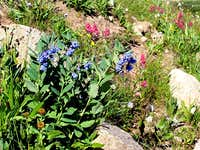 Trailside Flowers