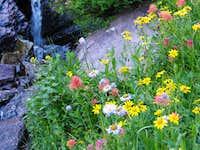 Glacier NP flowers