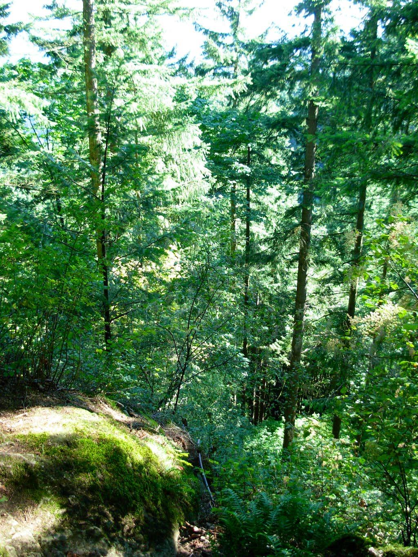 Wilderness Cliffs