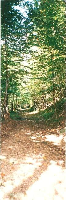 The trail to the summit of...