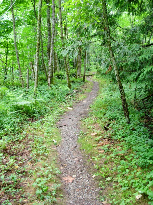 Trail on Cougar Mountain