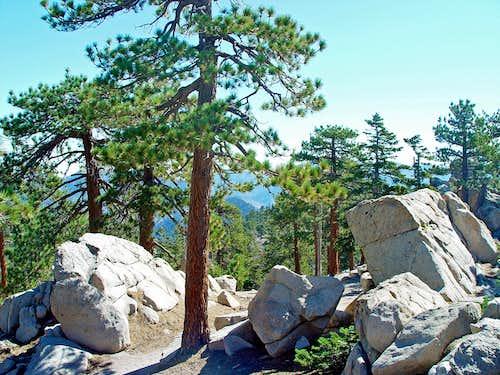 Summit Area of Waterman Mountain