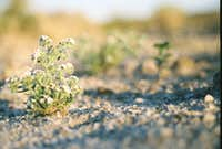 Friendly plant in Carrizo