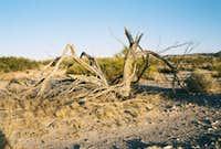 Friendly tree in Carrizo