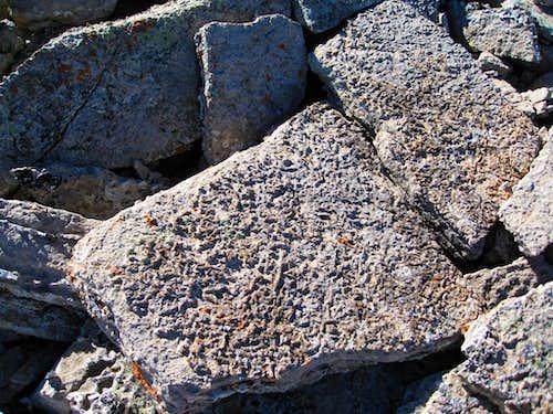 Talus Fossils