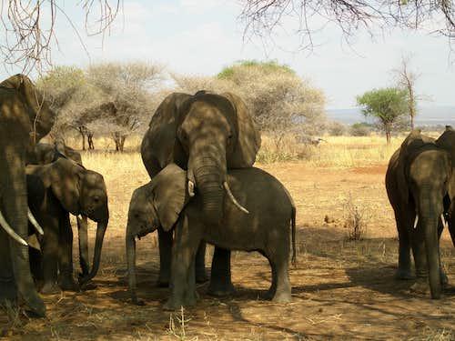 Elephant loving gesture